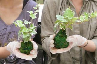 京都で苔玉作り体験