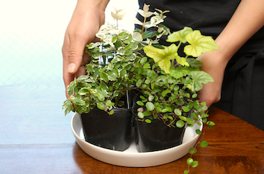 花工房の苔玉作り