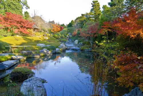 妙心寺退蔵院の秋のお食事付き特別拝観プラン