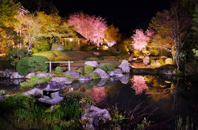 妙心寺退蔵院の夜桜ライトアップ