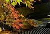 Plants: image 25 0f 27 thumb