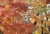 Plants: image 2 0f 27 thumb