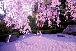 瓢箪池と桜