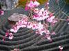 Plants: image 4 of 15 thumb
