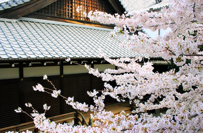 興正寺の桜
